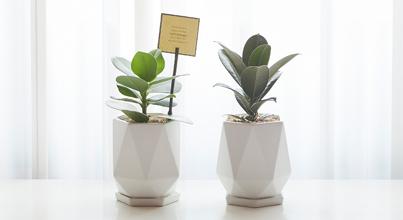 지스텀 공기정화 식물